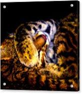 Zoo Baby Acrylic Print