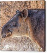 Zoo7 Acrylic Print
