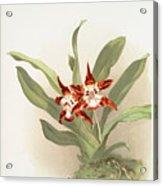 Zygopetalum Burtii Acrylic Print