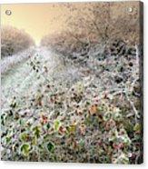 Autumn Frosts Acrylic Print