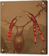 Brazilian Hummingbirds Acrylic Print
