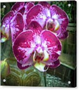 Cascade Of Orchids Acrylic Print