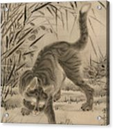Cat Catching A Frog Acrylic Print