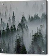 Foggy Yosemite Acrylic Print