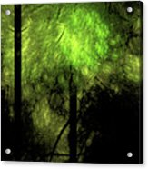 Forest Light Acrylic Print