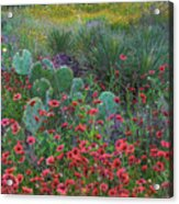 Indian Blanket Flowers And Opuntia Acrylic Print