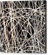 Lighttrails Acrylic Print