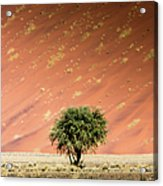Namib Desert Acrylic Print