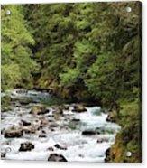 Ohanapecosh River Acrylic Print
