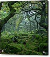 Padley Gorge Acrylic Print