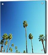 Palm Trees Against Blue Sky Acrylic Print