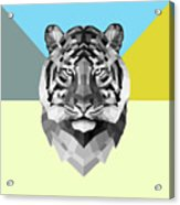 Party Tiger Acrylic Print