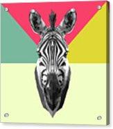 Party Zebra  Acrylic Print