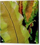 Plants And Leaves Hawaii Acrylic Print