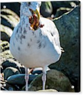 Seagull With Sail Acrylic Print