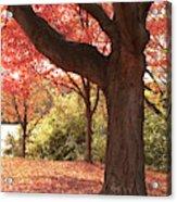 Shading Autumn Acrylic Print
