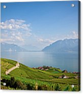 Vineyards Around Lake Leman Acrylic Print