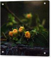 Wildflower Bouquet  Acrylic Print