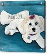 Wonton Acrylic Print