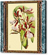 Vintage Orchid Antique Design Marble Blue-green  Acrylic Print