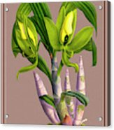 Orchid Vintage Print On Colored Paperboard Acrylic Print