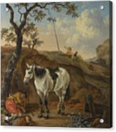 A White Horse Standing By A Sleeping Man  Acrylic Print