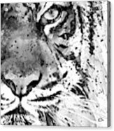 Black And White Half Faced Tiger Acrylic Print