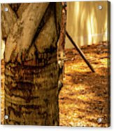 Branch To Branch Acrylic Print