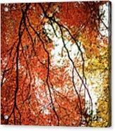 Fall Colors In Japan Acrylic Print