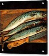 Fresh Mackerels Acrylic Print