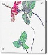Hibiscus 2 -  Watercolor By Ahmet Asar Acrylic Print