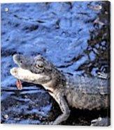 Little Gator Acrylic Print