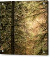 Stunning Fine Art Landscape Image Of Winter Forest Landscape In  Acrylic Print