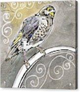 2018 Septembird 16 Myna Bird Acrylic Print