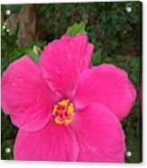 Bright Pink Hibiscus Acrylic Print