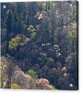 Early Spring, North Carolina Acrylic Print