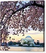 Jefferson Memorial Framed By Cherry Acrylic Print