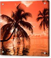 Palm Trees At Sunset, Moorea, Tahiti Acrylic Print