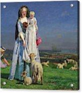 Pretty Baa-lambs Acrylic Print