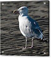 Seagull On Beach Acrylic Print