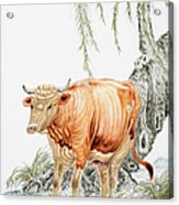Traditional Chinese Painting, Year Of Acrylic Print