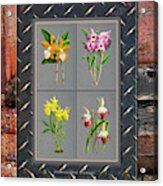 Orchids Antique Quadro Weathered Plank Rusty Metal Acrylic Print