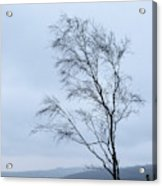 Moody Winter Landscape Image Of Skeletal Trees In Peak District  Acrylic Print