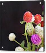 7191-multicolor Acrylic Print