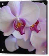 7195-orchids Acrylic Print