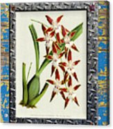 Orchid Framed On Weathered Plank And Rusty Metal Acrylic Print