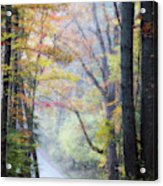 A Canopy Of Autumn Leaves Acrylic Print