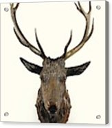 A Carved Wooden Red Deer Trophy With Red Deer Antlers, 19th Century Acrylic Print