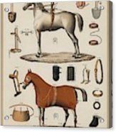 A Chromolithograph Of Horses With Antique Horseback Riding Equipments   1890  Acrylic Print