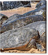 A Couple Of Turtles Stopped By Acrylic Print